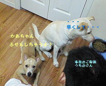 ひな ご飯2