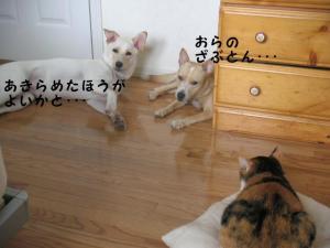 PICT0400.jpg