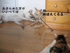 PICT0401.jpg