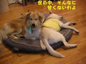 fukunokoi0803.jpg