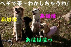 hanami080401.jpg