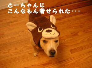 hinakuma2.jpg