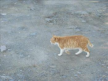 古利根沼の猫
