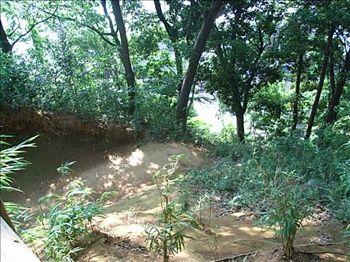 20070805_kanasugi_une2.jpg