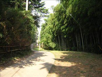 入口の道路