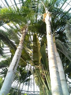 温室の熱帯雨林