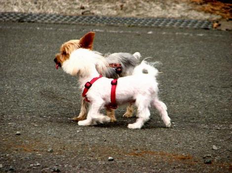 お散歩って 楽しいネ(*^。^*)