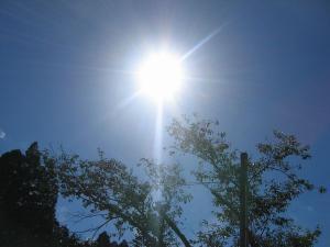 久し振りの太陽