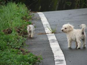 母さん 風が強くて 歩けないよ~^^;