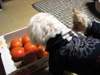クンクン これは!(^^)! 柿ですね~ 早く食べましょ!!