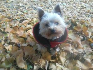 落ち葉の絨毯 散歩道