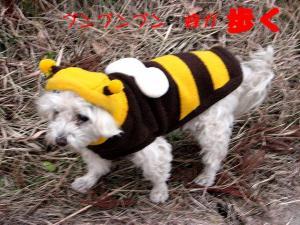 蜜蜂ま・・じゃなくて ヴェル