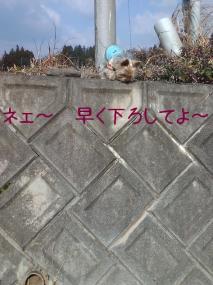 早く下ろせよ<(`^´)>