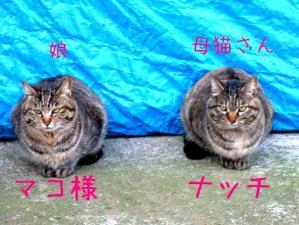ナッチ母さんとマコちゃん。