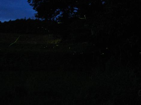 ホタルの光跡4