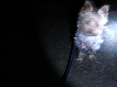 夜8時半の散歩