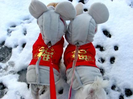 雪の中のネズミさん