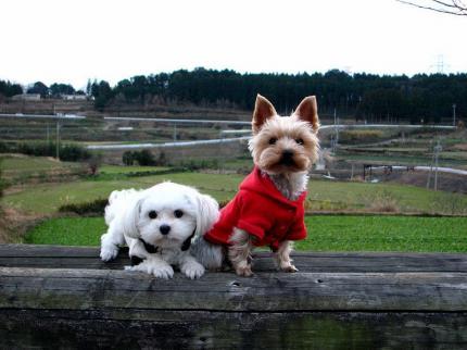 お散歩途中 寒~
