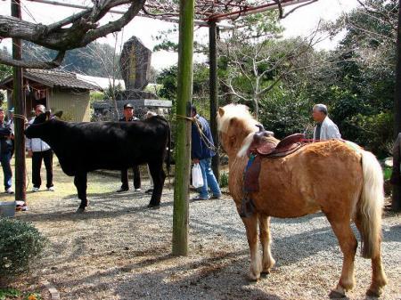 ポニー&黒牛