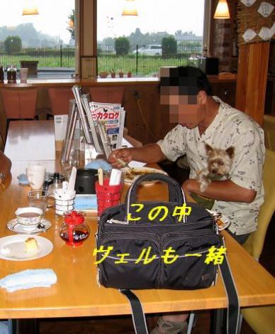 ドックカフェ・デビュー