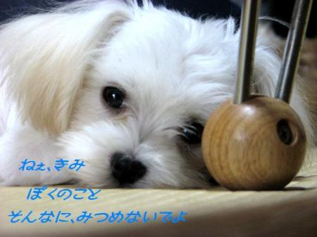 ぼくっち 恥ずかしいよ(*^_^*)