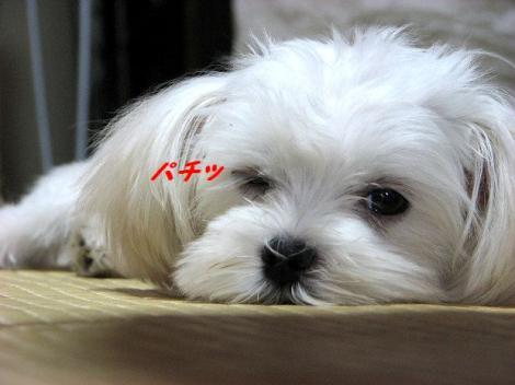 ウィンク・・(^_-)-☆