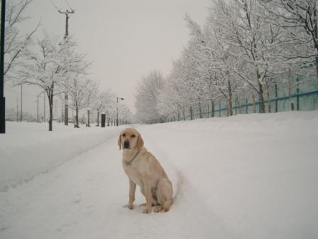 除雪完璧。