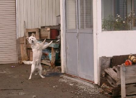 オイラも番犬!