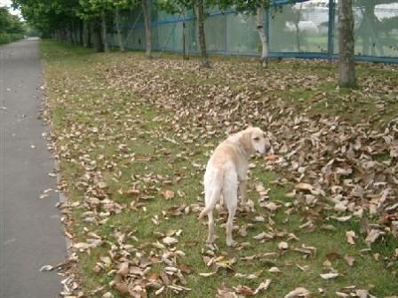 秋の予感・・・