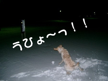 雪♪雪♪雪♪
