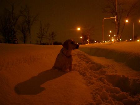 除雪が追いつかない・・・。
