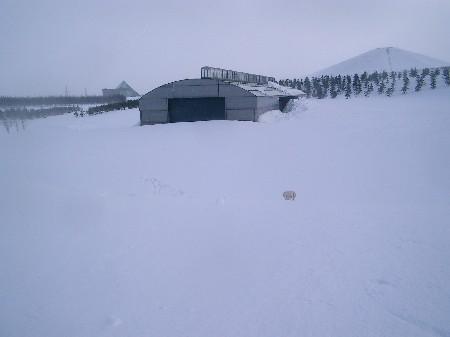 雪だま頂戴♪