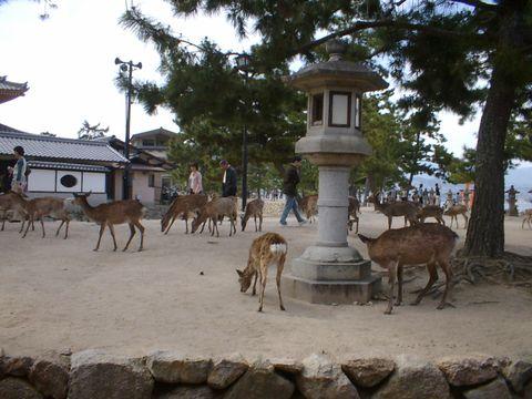 ちなみに鹿さんがいっぱい