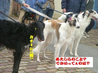 20060417212756.jpg