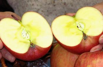 蜜がりんごの甘さを出します