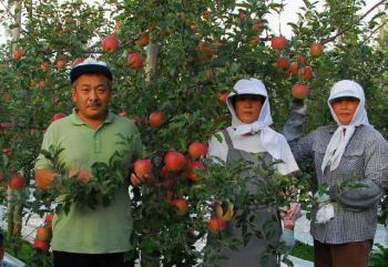 わたしたちが美味しいりんごをお届けします
