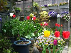2006 春