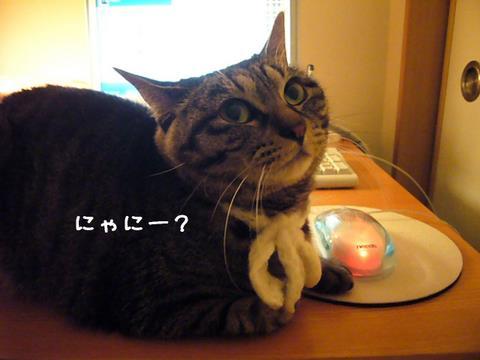 見返り美猫2