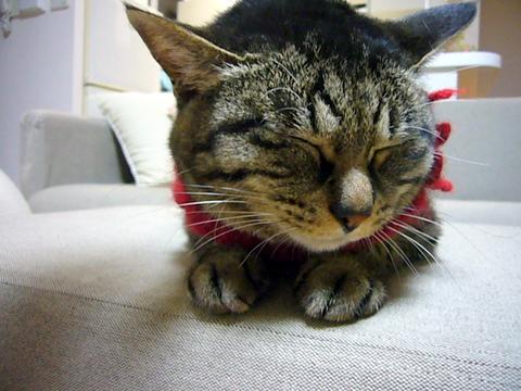 福猫ミュウ