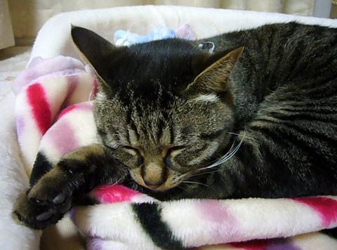 眠ってるミュウ