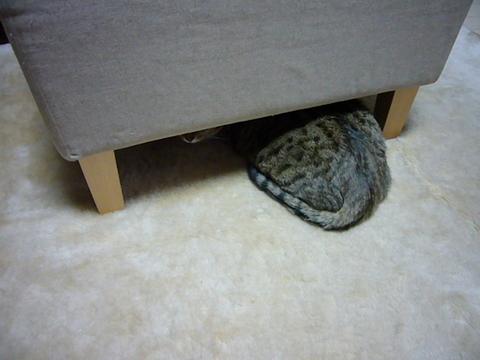 隠れてるつもり?2