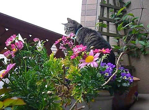 花に埋もれてるミュウ