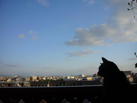 空を見つめるミュウ