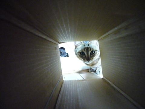 ながーい箱3