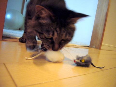 ネズミさん2