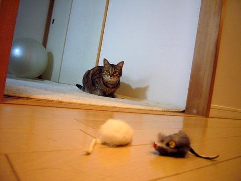 ネズミさん4