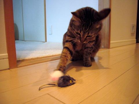ネズミさん5