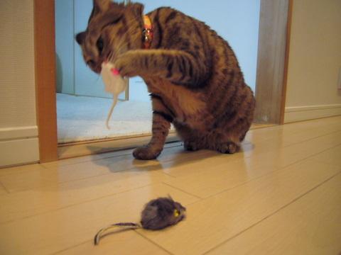 ネズミさん6