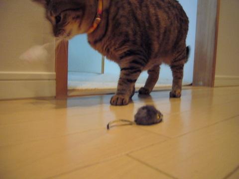 ネズミさん7