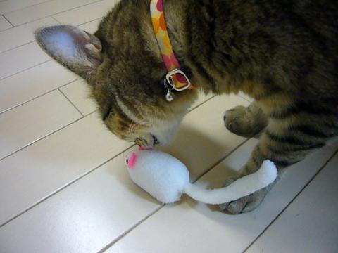 ネズミさん3